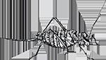 Sprinkhaan (Ephippiger) getekend door Marie van der Linden